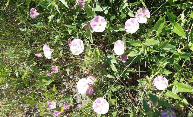 Blühecken